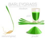 Superfood Barleygrass Стоковое Фото