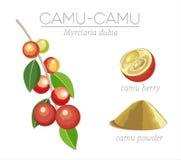 Superfood Camu Стоковые Изображения
