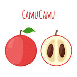 Superfood camu camu in flat style. Red camu berries, fruit. Stock Images