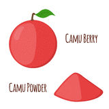 Superfood camu camu in flat style. Red camu berries, fruit. Royalty Free Stock Images