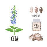 Superfood chia seeds set in flat style. Stock Photo
