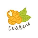 Superfood de Guarana d'isolement sur le blanc illustration de vecteur