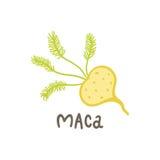 Superfood de racine de Maca illustration stock