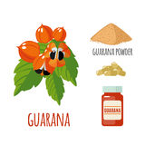 Superfood guarana set in flat style. Superfood guarana set in flat style: guarana berries, powder, pills. Organic healthy food. Isolated objects on white stock illustration