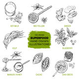 Superfood, hand drawn sketch. Vector illustration Stock Image