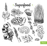 Superfood hand drawn vector illustration. Botanical isolated ske. Tch drawing. Chia, wheat grass, baobab guarana acai flax, camu camu. Organic healthy food stock illustration