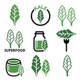 Superfood - kale leaves vector green icons set Stock Photo