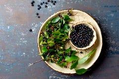 Superfood MAQUI莓果 印地安mapuche,智利Superfoods抗氧剂  碗新鲜的maqui莓果和maqui莓果树 库存照片