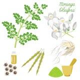 Superfood Moringa Imagem de Stock Royalty Free