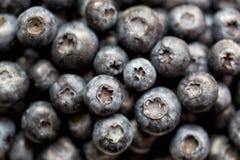 Superfood orgânico antioxidante do mirtilo em um conceito da bacia para comer e nutrição saudáveis Fotografia de Stock Royalty Free