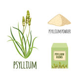 Superfood psyllium set in flat style. Royalty Free Stock Photo