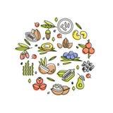 Superfood wektoru pojęcie Jagody, dokrętki, warzywo owoc i ziarna, Organicznie superfoods dla zdrowie Detox i weightloss royalty ilustracja
