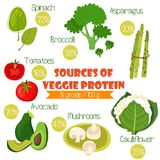 Superfoods set 2- Sources of Veggie Protein (% protein/ 100g). T. Omatoes, cauliflower, broccoli, spinach, avocado,asparagus and mushrooms Stock Photography