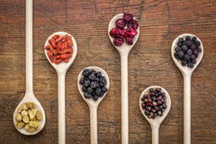 Superfruit berry collection. Healthy dried berry collection (blueberry, mulberry, cherry, goji, elderberry, chokeberry,) on  wooden spoons against rustic wood Stock Photography