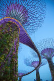 Purple trees: Man-made forest trees and jungle Stock Images