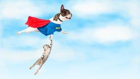 Superheld-Hund, der über Weiß fliegt Stockfotos