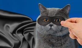 Superheld im Maskenkatzenporträt mit schwarzem Mantel Lizenzfreie Stockfotos