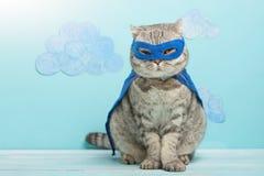 Superheldkatze, schottisches Whiskas mit einem blauen Mantel und einer Maske Das Konzept eines Superhelden, Superkatze, Führer lizenzfreie stockfotos