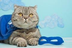 Superheldkatze, schottisches Whiskas mit einem blauen Mantel und einer Maske Das Konzept eines Superhelden, Superkatze, Führer lizenzfreies stockfoto