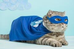 Superheldkatze, schottisches Whiskas mit einem blauen Mantel und einer Maske Das Konzept eines Superhelden, Superkatze, Führer stockfotografie
