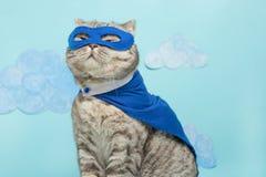 Superheldkatze, schottisches Whiskas mit einem blauen Mantel und einer Maske Das Konzept eines Superhelden, Superkatze, Führer lizenzfreies stockbild