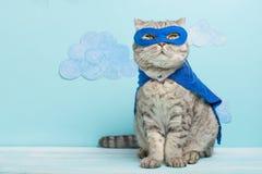 Superheldkatze, schottisches Whiskas mit einem blauen Mantel und einer Maske Das Konzept eines Superhelden, Superkatze, Führer stockbild