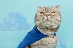 superhero cat, in a blue raincoat royalty free stock photos