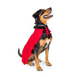Superhero Dog Sitting to Side Looking Up Royalty Free Stock Photo