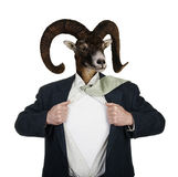 Superhero With Head of a Goat Royalty Free Stock Images