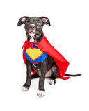 Superhero Puppy Dog Wearing Vest and Cape Royalty Free Stock Photography