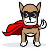 Superhund Stockfotografie