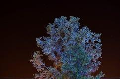 Superior da árvore iluminado de baixo de e céu imagem de stock royalty free