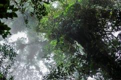 Superior das árvores visto de baixo de fotografia de stock
