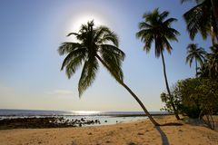 SUPERIOR MORNING BEACH WITH PALM TREES. IN INDIAN OCEAN, MALDIVE ISLAND, FILITEYO Royalty Free Stock Images