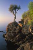 Superiore di lago cedar bianco fotografie stock