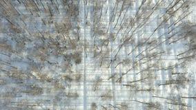 Superiore giù osservare ragazza che corre nella foresta nevosa video d archivio