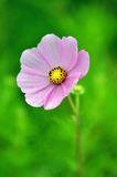 Supermakroschuß der Blume für schönen Hintergrund Stockbild