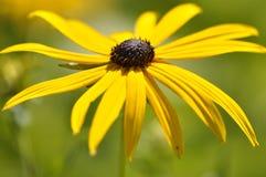 Supermakroschuß der Blume für schönen Hintergrund Lizenzfreie Stockfotografie