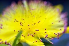Supermakroschuß der Blume für schönen Hintergrund Lizenzfreies Stockfoto