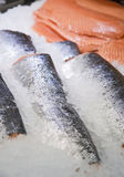 In supermarket fresh raw fish sturgeon on ice Royalty Free Stock Photos