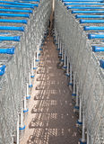 Supermarket shopping carts Royalty Free Stock Photo