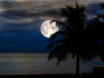 Supermondschattenbildkokosnuß auf Strand im nächtlichen Himmel Lizenzfreie Stockbilder