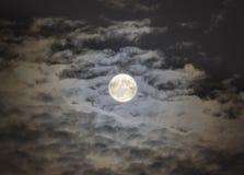 Supermoon i en himmel av vadderade moln, 2015 fotografering för bildbyråer