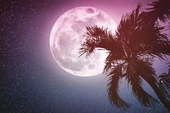 Supermoon with many stars. Beautiful night landscape of sky with full moon behind betel palm tree, outdoor in gloaming time. royalty free stock photo