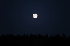 Supermoon over forest on dark night sky Royalty Free Stock Photo