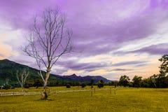 Supernatural dead tree in green field Stock Image