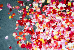 Supernatural Rose Petals Background Stock Photo