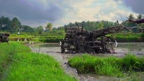 Superslowmotion сняло фермеров которые культивируют поле перед засаживать рис Поле покрыто с грязной водой сток-видео