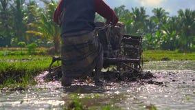 Superslowmotion сняло фермеров которые культивируют поле перед засаживать рис Поле покрыто с грязной водой видеоматериал