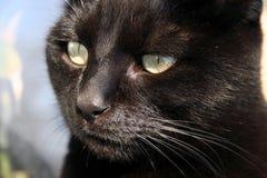 Superstição do gato preto Imagens de Stock Royalty Free